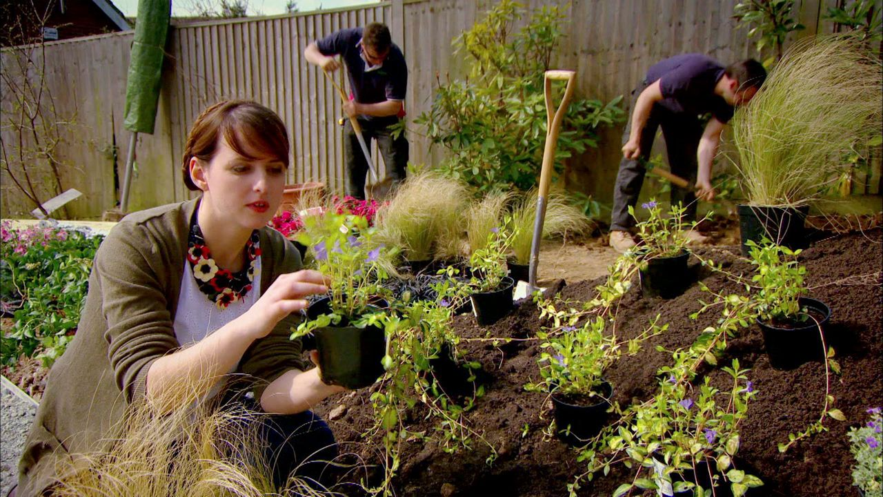 Disease plagues and the fight against them: to help a beginning gardener